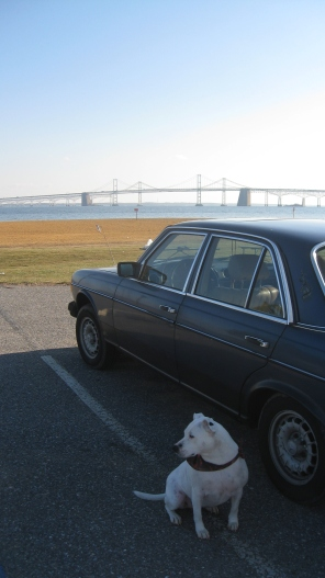 The Bay Bridge is in the background. Dolly is sitting on the mainland side of Maryland with her back to the Chesapeake Bay and the DelMarVa peninsula.
